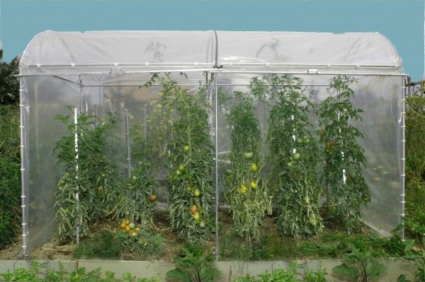 Tomatenhaus TH 140-340 Stahl